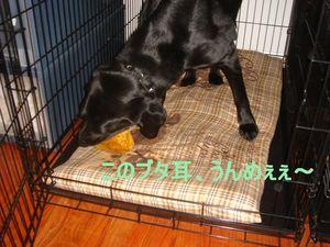 Christmas_2006_006