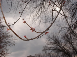 Spring_15mar07_002